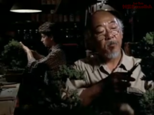 Karate Kid Bonsai